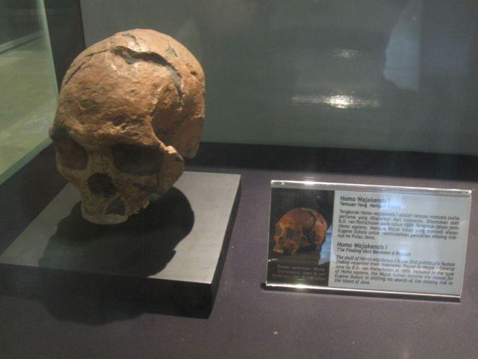 En del av utställningen om historiska människan i Indonensien. Första skelettet av Homo Erectus hittades här på Java! Part of the exhibition of the historical human in Indonensia. The first skeleton of Homo Erectus was found here on Java!