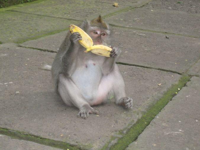 Bananer är för apor ;)! Bananas are for monkeys ;)!