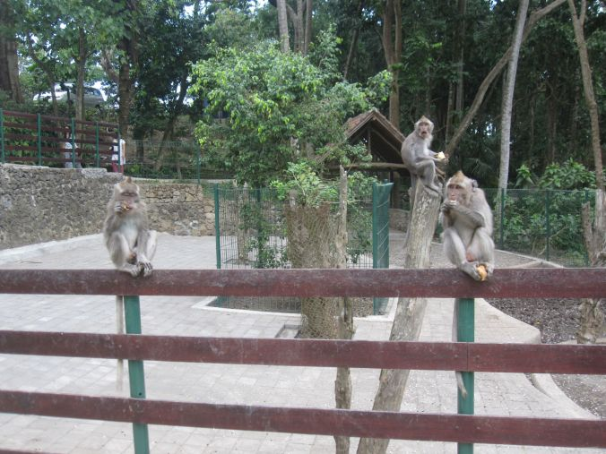 Monkey Forest! Väldigt tevligt naturreservat för apor där de får röra sig fritt (och naturligtvis lämna parken om de vill!). Very nice nature reserve for monkeys where they are free to move around (and of course leave the park if they want to!)