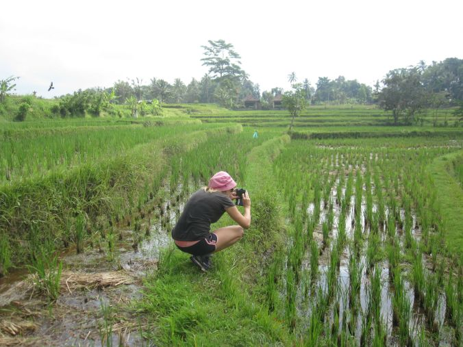 Ulrika fotar risfälten! Ulrika taking pictures of the rice fields!