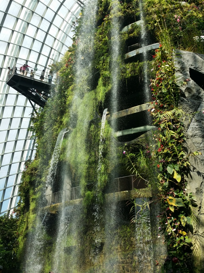 "Växthuset ""Cloud forest!. The green house ""Cloud Forest""!"