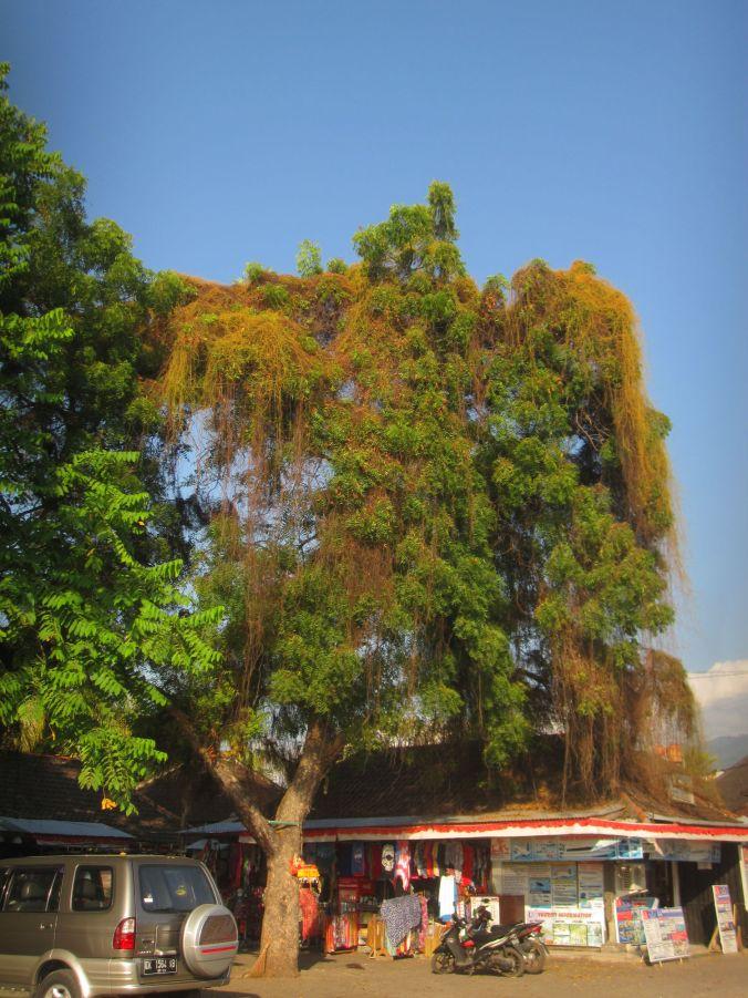 Häftigt träd! A cool tree!