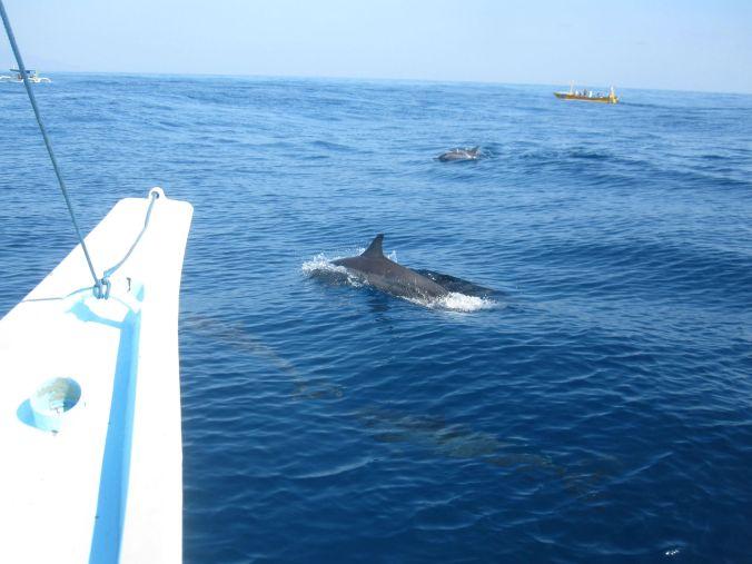 Delfiner! Dolphins!
