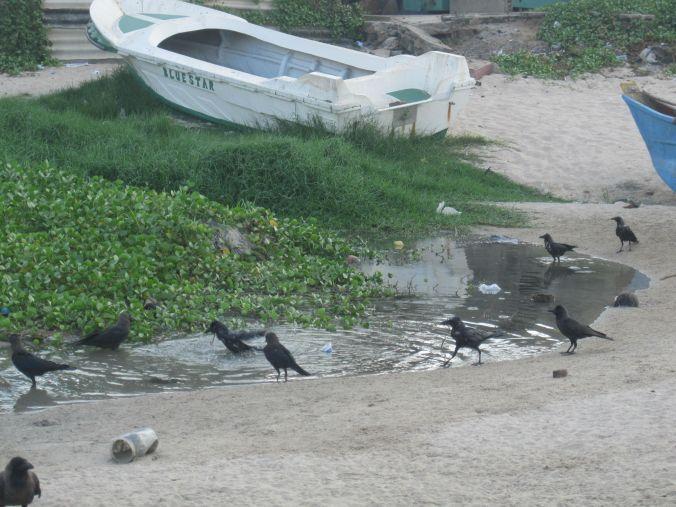 Fågelbad! Bird bath!