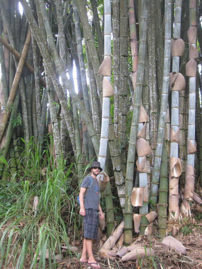 Vi hittade jättebambuträd i Udawatta Kele-skogen! We found giant bamboo trees in the Udawatta Kele Forest!