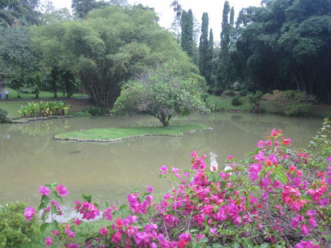 Botaniska trädgården i Kandy! Botanical gardens in Kandy!