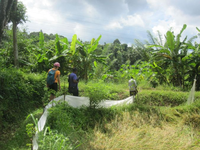 Promenera bland risfälten! Stroll among the paddy fields!