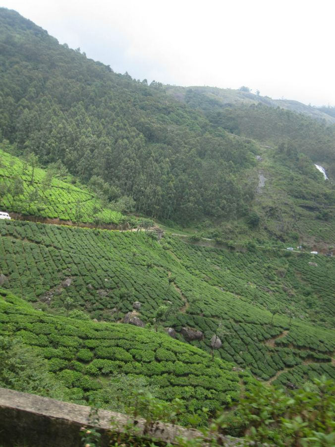 Massor med teodlingar som gör att berget luktar te! Lots of tea plantations that make the mountain smell of tea!