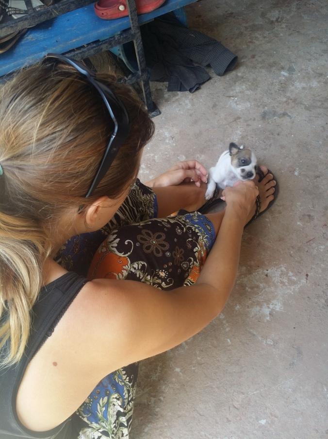 Familjen Rashika hade tagit hand om en liten 3-veckors valp som förlorat sin mamma i en trafikolycka som var jättesöt! The Rashika family had taken care of a small 3-week puppy, that was really cute, who lost his mother in a traffic accident!