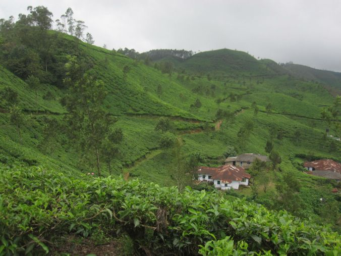 Vandra i teplantagen! Walking in the tea plantation!