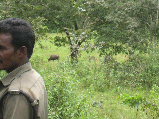 Vi hittade massor med bison. De är svårfångade på bild då de flyr så fort de upptäcker en. We found lots of bison. They are hard to catch in a photo, because they flee as soon as they discover you.