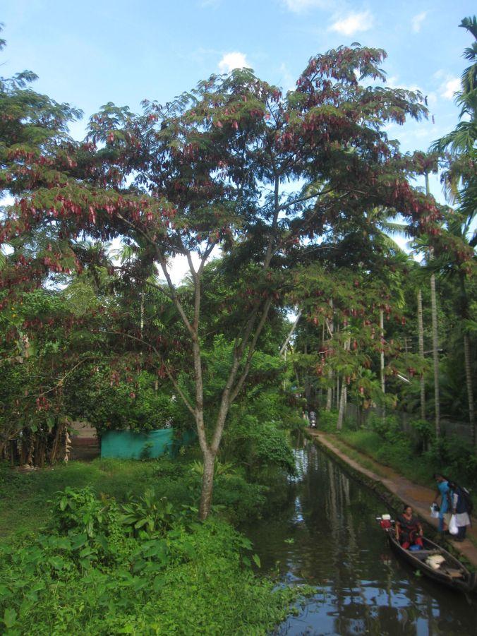Ett träd med röda löv bryter av all grönska! A tree with red leaves breaks all the greenery!