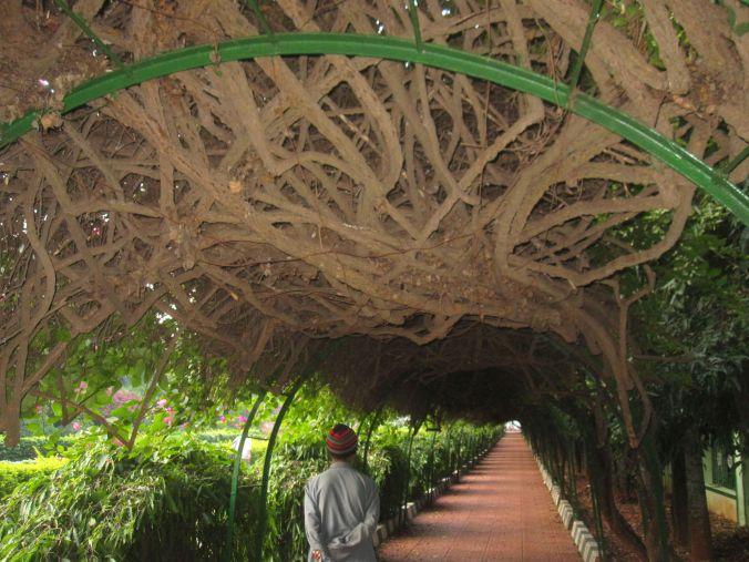Lalbagh botaniska trädgård! Lalbagh Botanical Garden