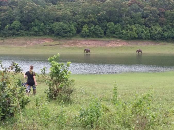 Vi hittade elefanterna tillslut! We finally found elephants!