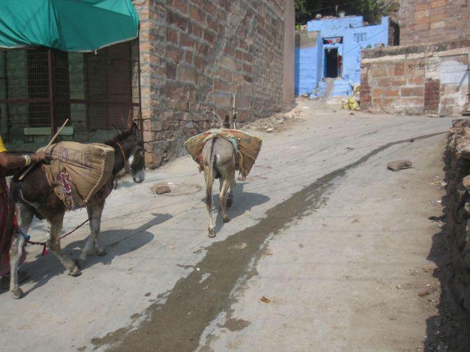 På vår promenad upp till fortet mötte vi på många olika sorters djur, däribland åsnor! We met different kinds of animals, including donkeys, on our walk up to the fort!