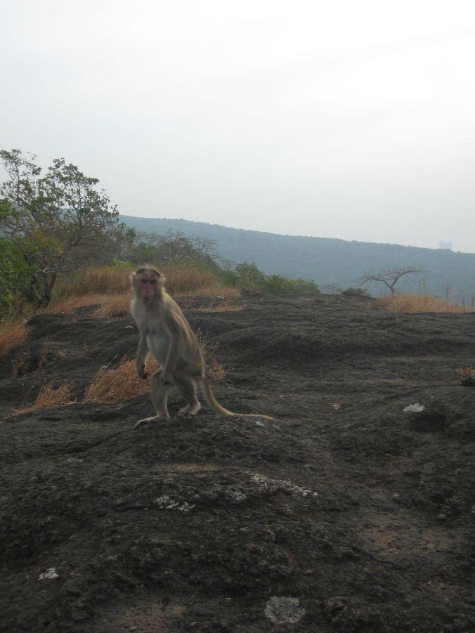 Vi fick också sällskap av en apa medan vi satt och pratade! A monkey joined us while we sat and talked!