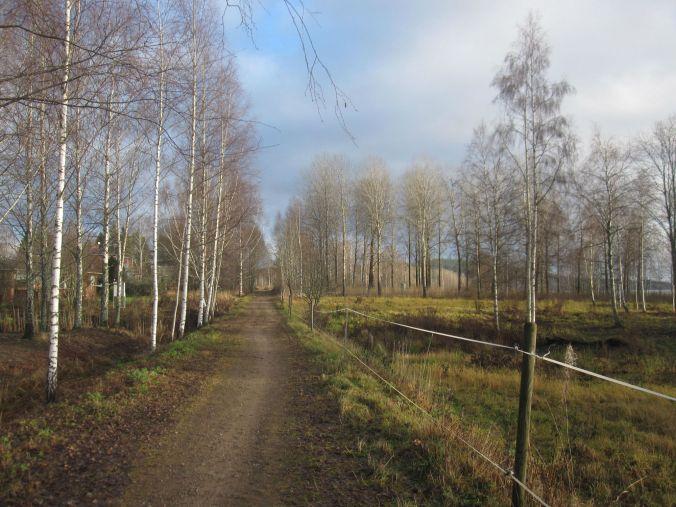 Banvallen i Långshyttan kantad av vinterklädda björkar! railway embankment in Långshyttan lined with winter-clad birches!