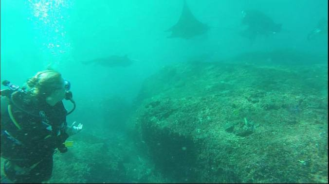 Rebecca spanar in jätterockorna i Bali! Rebecca checking in the giant manta rays in Bali