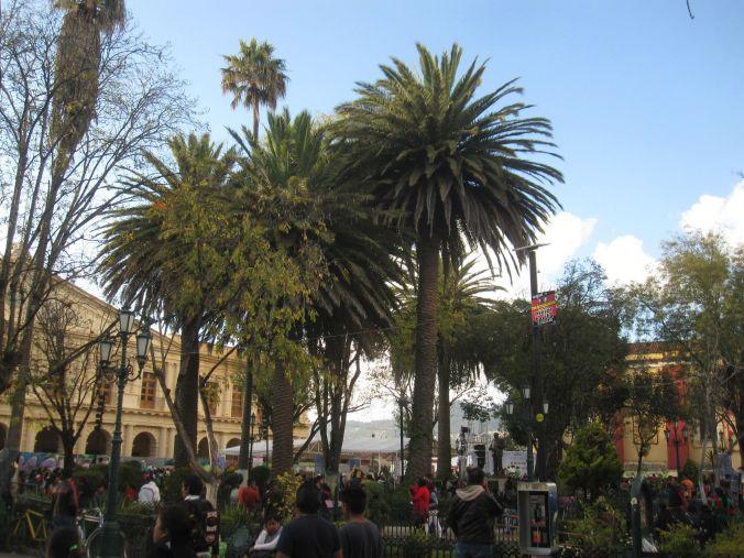 Blev överraskad av att se palmliknande träd på så hög höjd. Was surprised to see palm-like tree at such high altitudes.