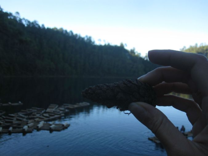 Vi hittade även kottar från granarna vid Lagunas de Pojoj ! We also found fir cones from the fir trees at the Laguna de Pojoj!